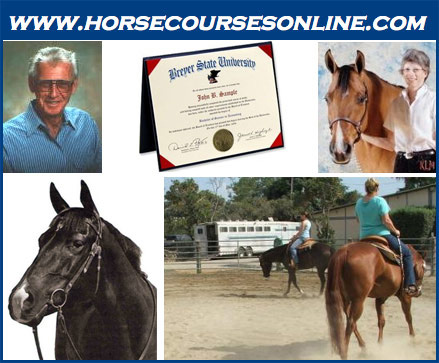 Equine AA degree offered online. – Elite Equestrian magazine