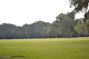 25 Acre Equestrian farm for sale by owner, Ocala, Florida – Elite