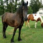 655 Hempfield Hill Description Columbia, Pennsylvania 17512 elite equestrian magazine #eliteequestrian #equestrian #realestate